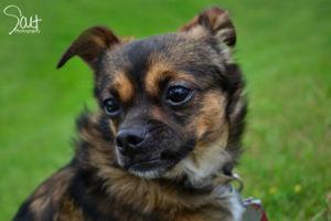 Gary Adopted: September 2015