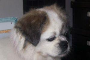 Hailey Adopted: November 2015